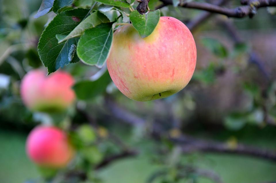 äpple10