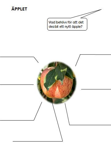 äpple2