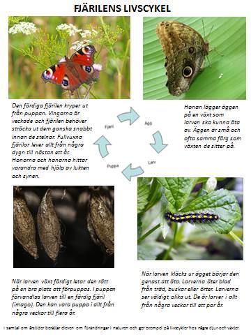 insekter4