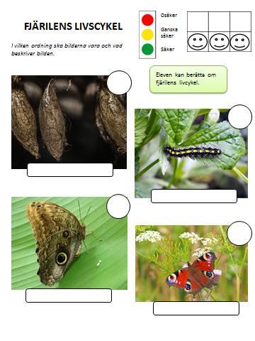 insekter5
